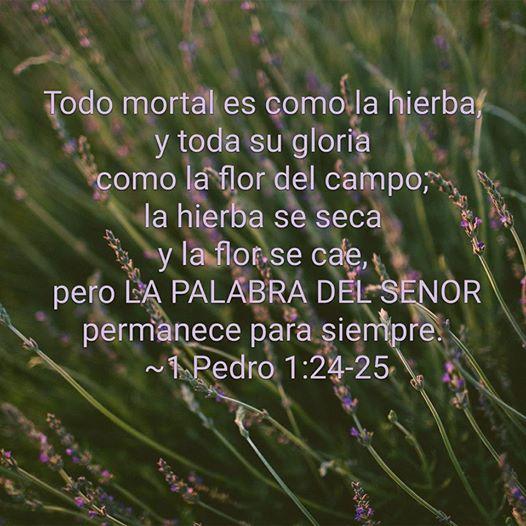 VERSICULO BIBLICO DE LA REFORMA - 1 Pedro 1:24-25