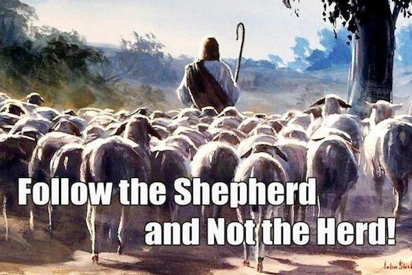 Sigue a Jesus El Pastor