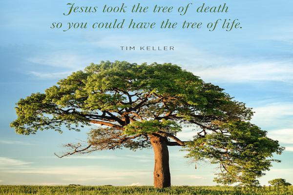 Jesus, El Arbol de Vida - Tim Keller
